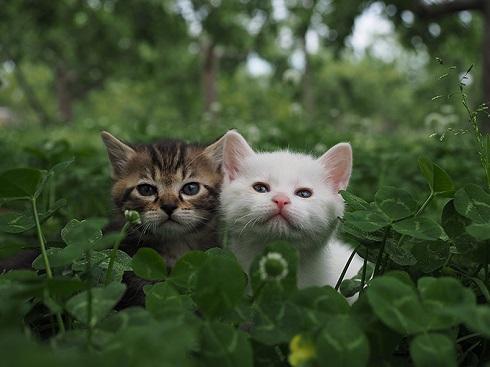 岩合光昭の世界ネコ歩き 劇場版 応援上映 豊洲