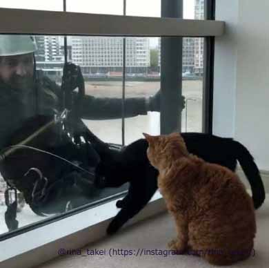 窓拭きおじさん 猫 ギネス ピムス 交流