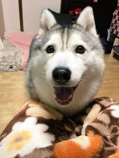 人形遊び テンション 表情 犬 シルビア