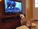 ディカプリオをお助けするワン! 映画「レヴェナント」鑑賞中に凶暴クマとにらみ合い
