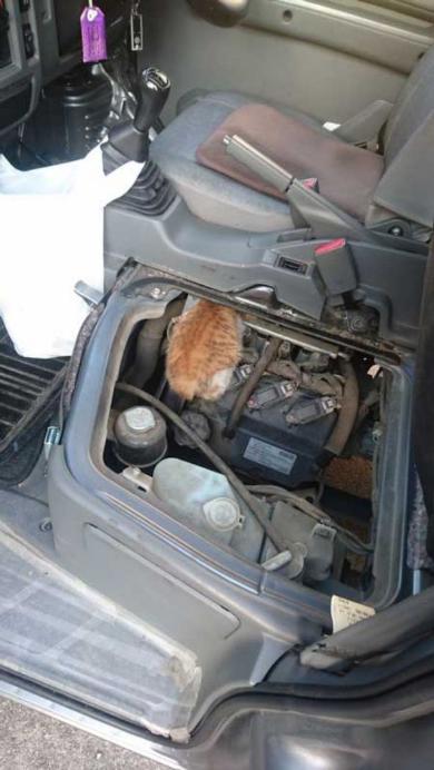 商業車 猫バンバン 座席