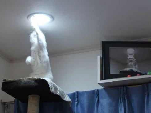 猫 カリン様 ドラゴンボール