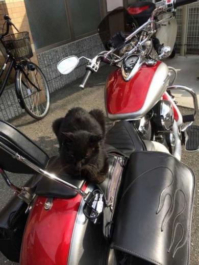 バイク 猫 平和 解決 座布団