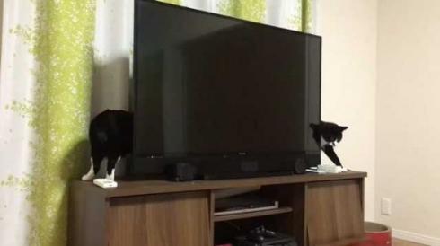 猫 胴体 伸びる 長い マジック