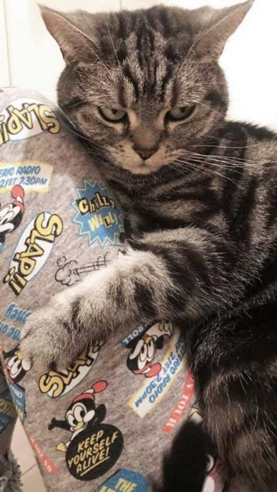 怒った 猫 ヒザ 降りない 顔