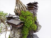 CLIFF BONSAI 断崖盆栽