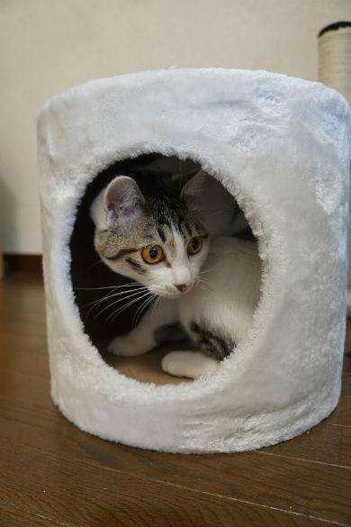 東大ラノベ作家の悲劇 猫
