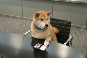 アドビ特命宣伝部長柴犬まる