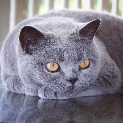 ローストチキン猫