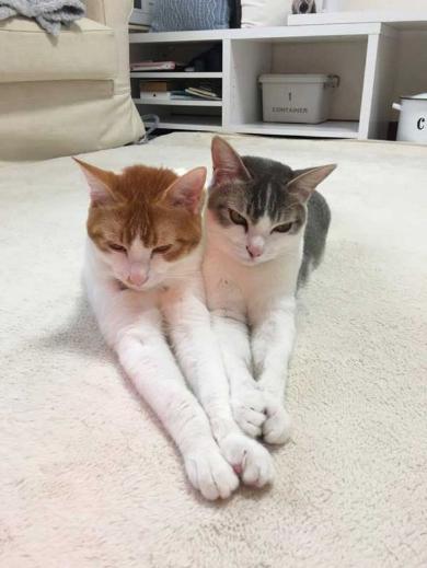 猫 双子 仲良し ハグ
