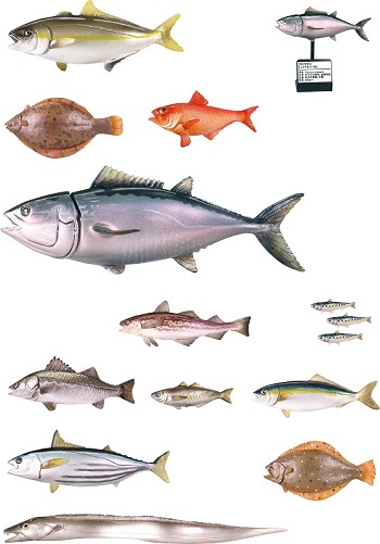 原色海水魚図鑑