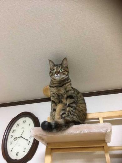 面白い 謎 ポーズ 猫 いつも