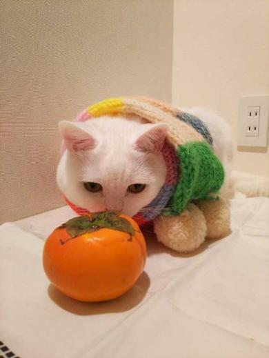 猫 あたたまり方 ファンヒーター 冬
