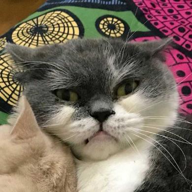 取調中 熟年 刑事 猫
