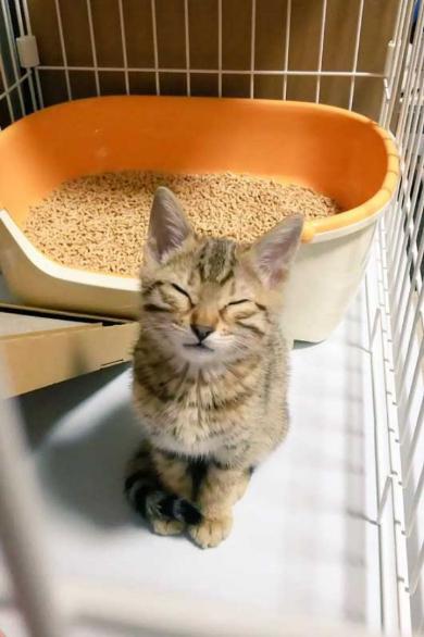 ソシャゲ 猫 課金 時間 ヤバイ