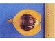 農水省「ビワの種子、食べないで」 クックパッドも掲載のレシピを削除対応