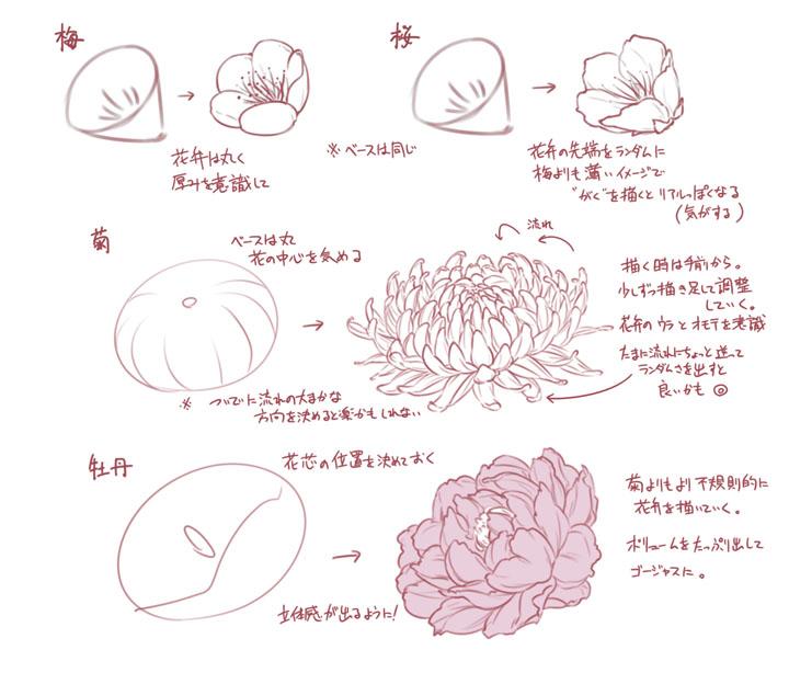 梅や桜ボタンにバラ 花を描くコツをまとめた図説が参考になると話題