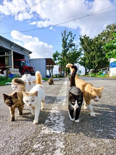 野良猫散歩さん