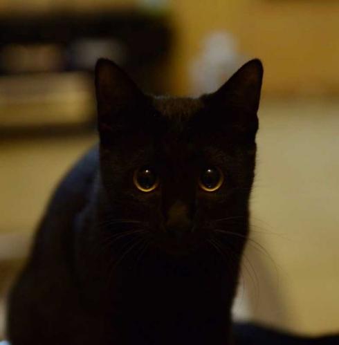 猫 お風呂 抵抗 しゃべる