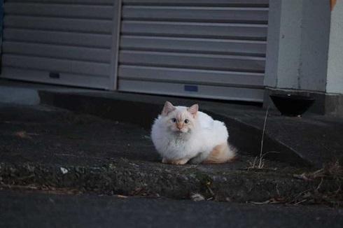 一眼レフ カメラ 初めて 猫 速そう 足 動き
