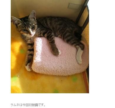 藤崎奈々子 猫 ラムネ