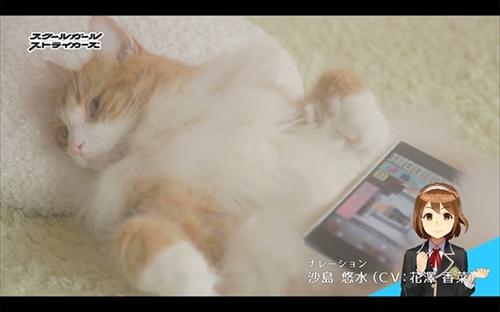 スクスト猫動画