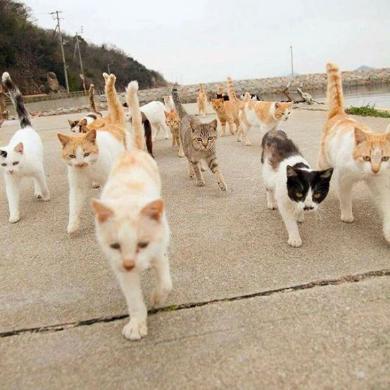 立ち猫 写真 山本正義