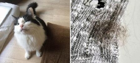 猫毛かくれんぼソックス