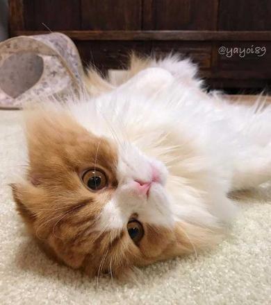 猫 うずらちゃん タラちゃん 猫草 寝顔 Instagram
