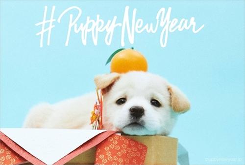 PUPPY NEW YEAR