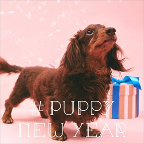 PUPPY NEW YEAR