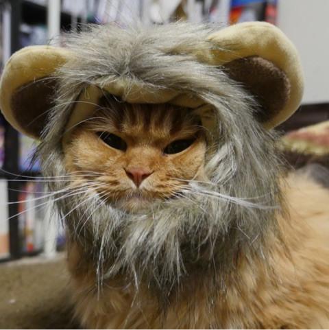 ライオン猫