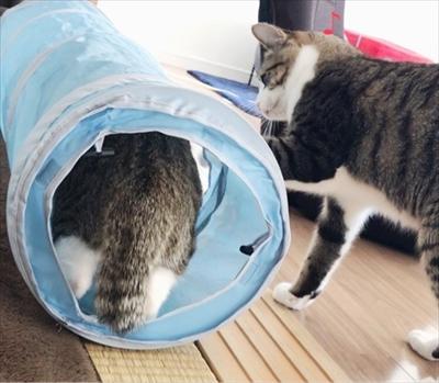 アメブロ 猫のすずめちゃん
