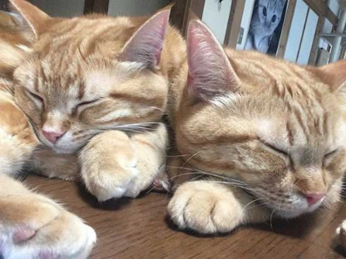 猫 家族 並ぶ ファミリー Instagram