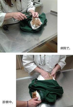 ネコのお守り袋