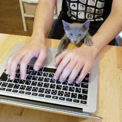 敏腕 凄腕 トレーダー 猫 子猫 成長