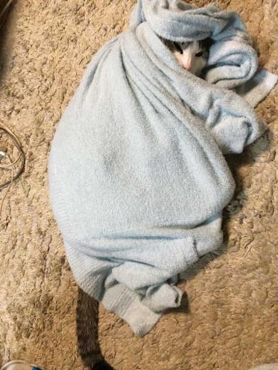 寝巻き むくり 猫 ココニャ