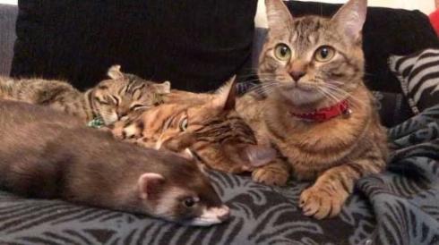 猫 フェレット 仲良し Instagram