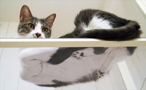 ネコの裏側