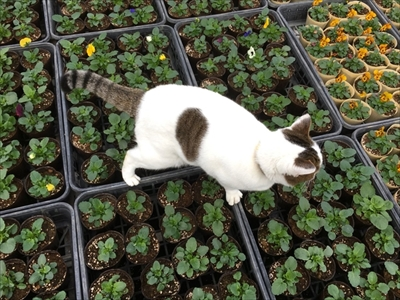 わたなべ花壇・猫のチビちゃん