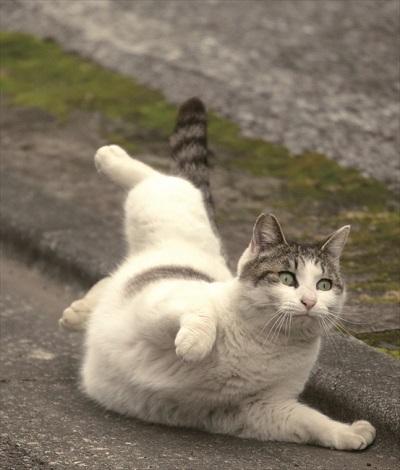 写真展・必死すぎるネコ