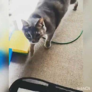 猫 機嫌 ちゅ〜る 態度が豹変
