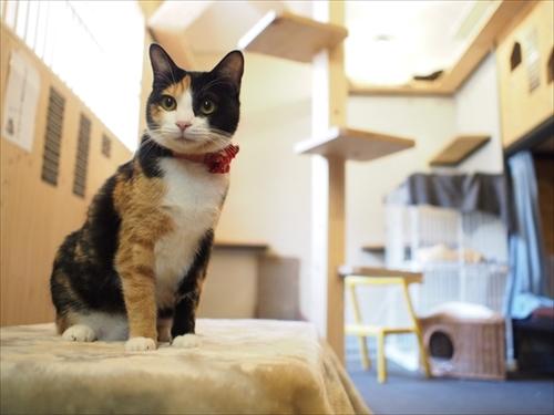 経堂 保護 猫 カフェ