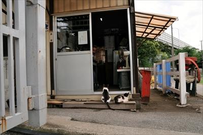 人情船橋競馬場厩舎ネコ物語