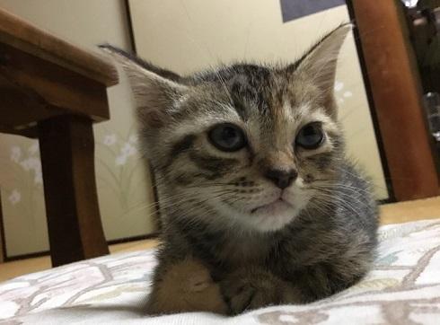 「帰らないで欲しいニャ〜」猫と一晩を過ごせる猫付き旅館「まいきゃっと湯河原」が癒される