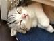 「帰らないで欲しいニャ〜」 猫と一晩を過ごせる猫付き旅館「まいきゃっと湯河原」が癒される