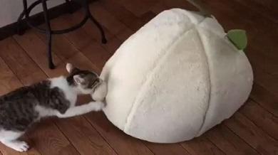猫 布団泥棒