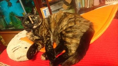 PCディスプレイの前で寝る猫ちゃん