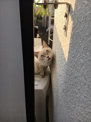 荒ぶる猫・あずきちゃん