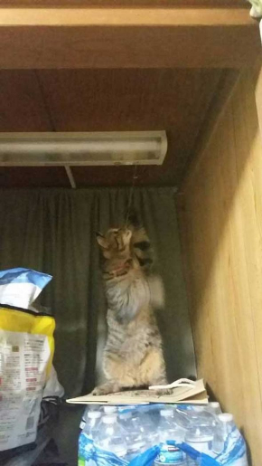 猫 電気 つける 消す 犯人
